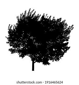 Silhouette of tree on white background.