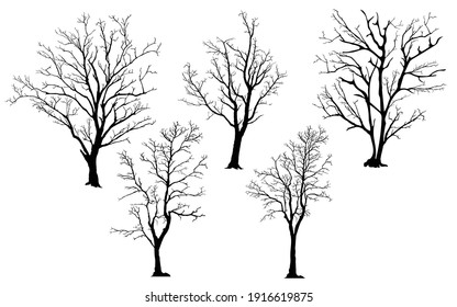 silhouette of tree without leaves
