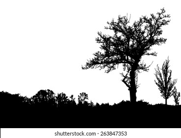 Silhouette of trees with bare branches - winter scenery - trees afar- landscape and black space for text - isolated - vector