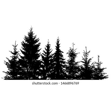 The silhouette of the trees. The forest is from a christmas tree. Vector