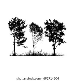 Silhouette of trees in the forest. Vector