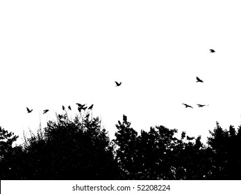 Silhouette of Treetops and Birds