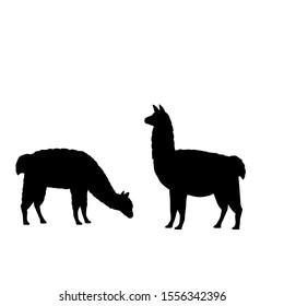 Silhouette of two alpaca llamas. Alpaca Llama family. Vector illustrator