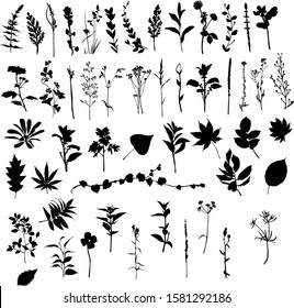 Silhouette of various ornamental plants predominantly growing in the field
