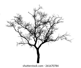 The silhouette vector isolated on white