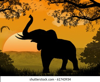 silhouette view of elephant at sunset, wildlife
