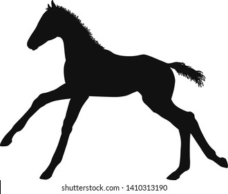 Warmblood Horse Stock Illustrations, Images & Vectors | Shutterstock