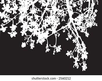 A silhouette of white braches on black