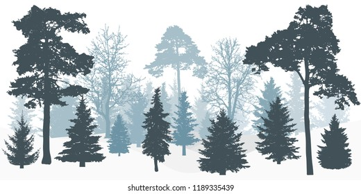 Silhouette of winter snowy forest (trees).