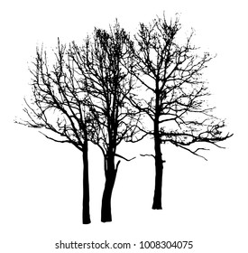 Silhouette of winter tree without leaves on plain white background isolated clip art vector illustration