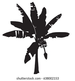 Silhouette of a young banana tree with a flower and fruits in the vector image on a white background