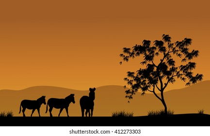 Silhouette of zebra in fields africa with brown backgrounds