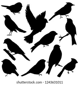 silhouettes of birds in black color
