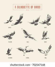 A silhouettes of birds. Eagle, dove, falcon, gull, duck, catbird, stork, owl, hand drawn vector illustration, sketch