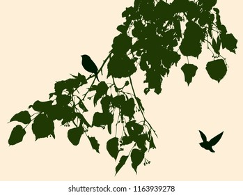 Silhouettes of birds and linden branch in summer