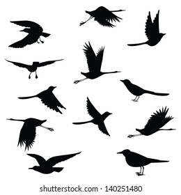 silhouettes birds on white background.Vector