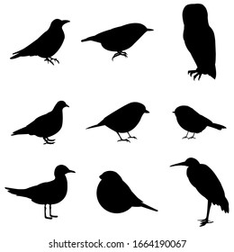 Silhouettes of birds, set, isolated on a white background. Birds: crow sign, pigeon symbol, seagull icon, barn owl, bullfinch logo, heron, chickadee, nuthatch, willow tit. Vector stock illustration