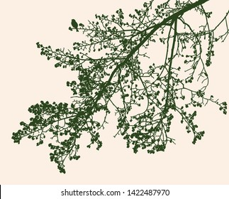 Silhouettes of branches of linden tree in spring