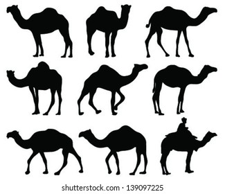 Silhouettes of camel-vector
