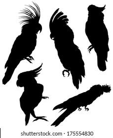 silhouettes cockatoo