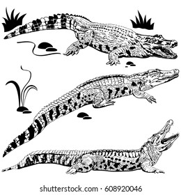 Silhouettes of crocodiles