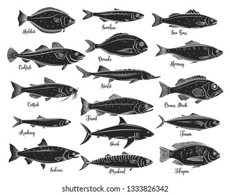 Silhouettes fish. Isolated seafood with bream, mackerel, tuna or sterlet, catfish, codfish and halibut. Tilapia, ocean perch, sardine, anchovy, sea bass and dorado. Retro style, vector illustration