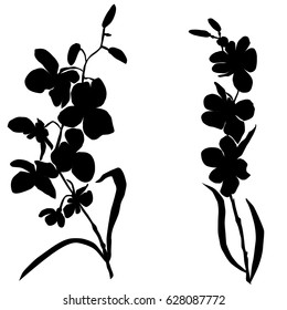 Silhouettes of flowers, orchids, vector, black color, isolated on white background, hand drawing