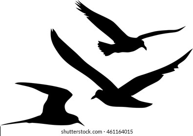 Silhouettes of flying seagulls