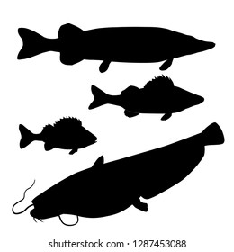 Silhouettes of freshwater predatory fishes. Pike, zander, perch, catfish. Vector illustration isolated on white background
