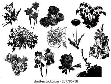 Coloring Pages Zinnia : Hand drawn line illustration iris wildflowers stock vector 435509563