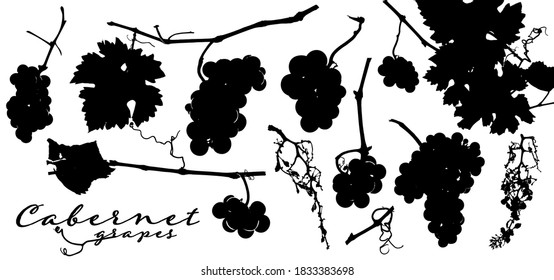 Silhouettes of grape bunches, vine leaves and vineyard branches. Vector illustration for your designs.
