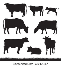 Silhouettes of grass, caws and baby cows in different poses