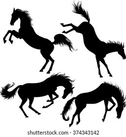 silhouettes of the kicking horses