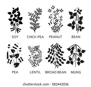 Silhouettes of legumes plants with leaves, pods and flowers. Vector illustration.