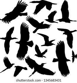 silhouettes of miscellaneous birds