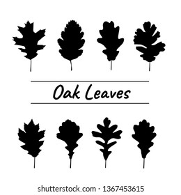 Silhouettes Oak leaves Collection in  black color isolated on white background. Illustration about tropical palm leaves.