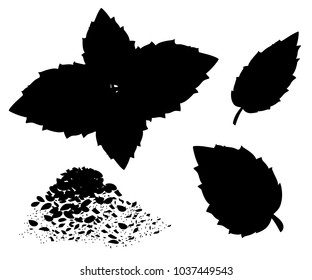 Silhouettes of Oregano set vector. Isolated Oregano plant with leaves. Herbal engraved style illustration. Detailed organic product sketch. Cooking spicy ingredient Web site design