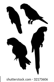 silhouettes of parrots
