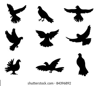 Silhouettes of pigeon