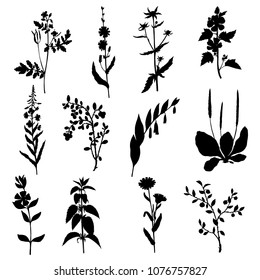 silhouettes of plant, monochrome botanical illustration , isolated floral elements
