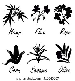 Silhouettes of plants, used for vegetable oil production (corn, olive, flax, sesame, rapeseed, hemp). Set of hand drawn vector illustrations.