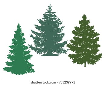 Silhouettes of spruce and pine. Vector image of coniferous trees.