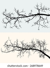 silhouettes of the tree branches