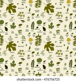 Silhouettes of tree leaves (mulberry, mirabelle, bougainvillea, hornbeam, pomegranate, oak,  boxwood, bay, myrtle, olive, peach, plane, kiwi). Vector botanical illustration.
