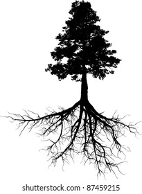 Silhouettes of tree with its roots
