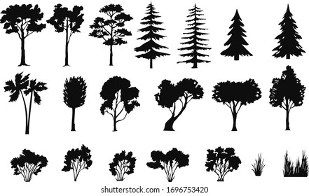 silhouettes of trees bushes, spruce, palm