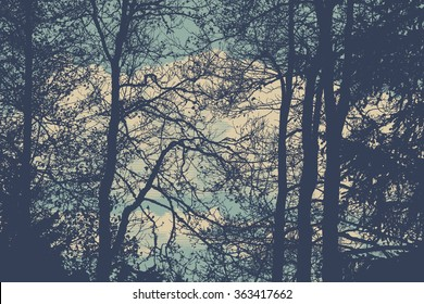 silhouettes of trees. detailed vector illustration