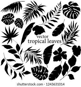 silhouettes of tropical leaves in black