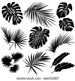 Silhouettes of tropical leaves. Set of vector silhouettes on white background