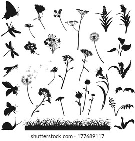 silhouettes of various flowers, herbs and insects on a white background